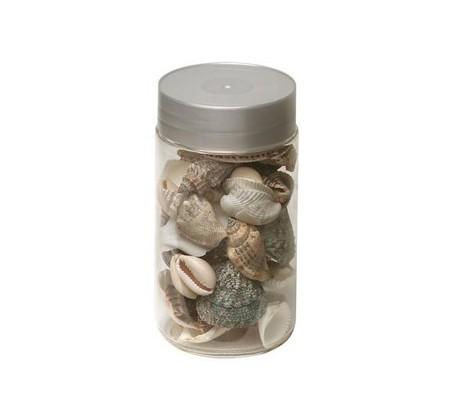 Dekoracyjne muszelki, Leroy Merlin, 14,50 zł