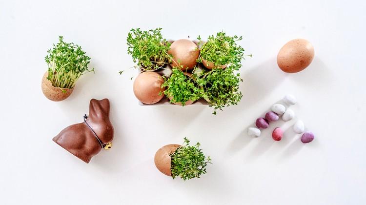 rzezucha-Wielkanoc-13