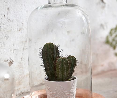 Kaktus, fot. Hubsch